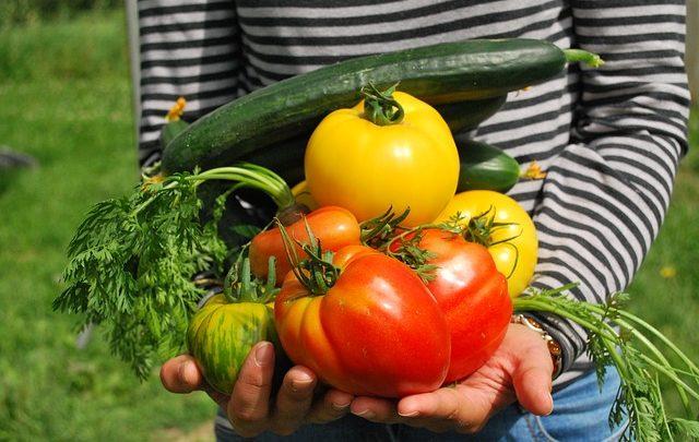I vantaggi di avere l'orto in casa