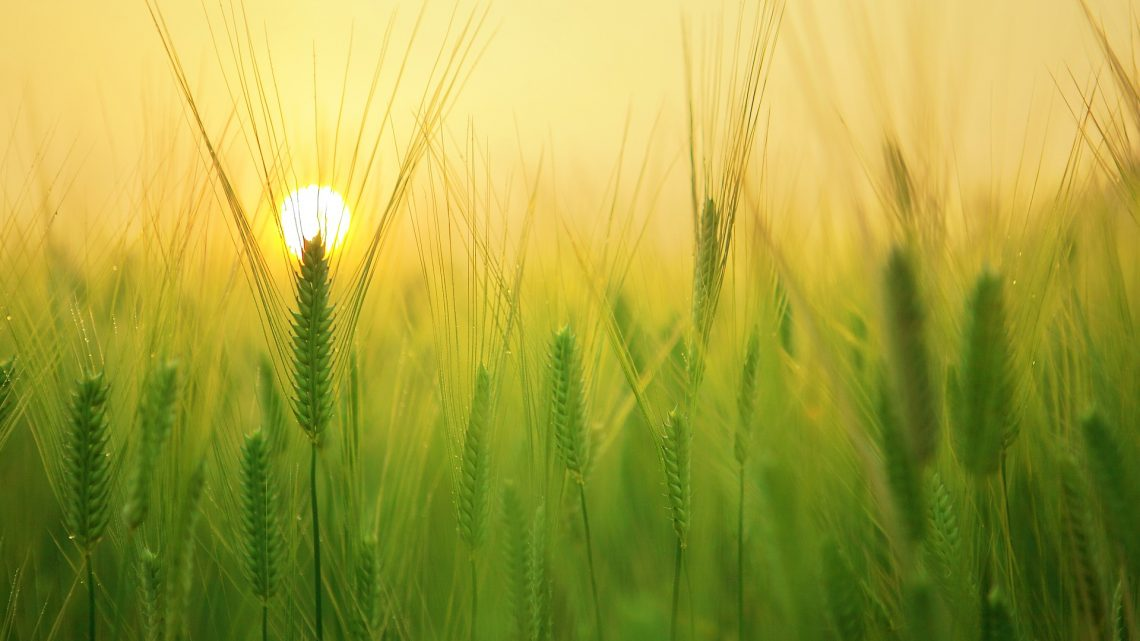 DL sostegni, i bonus agricoli nel 2021